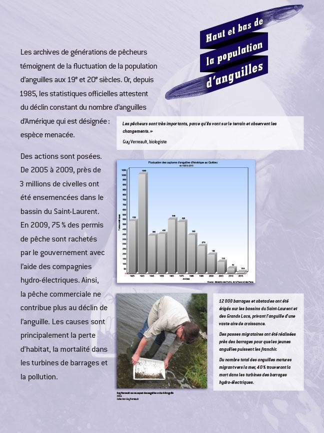 Panneau sur le déclin de la population d'anguille