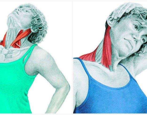 Спиральный твист шеи: упражнения для улучшению кровотока и иннервации