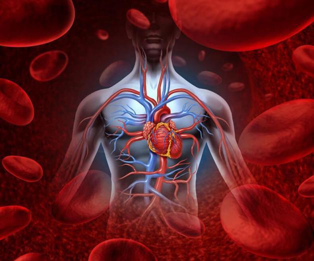 Очищение крови и лимфы