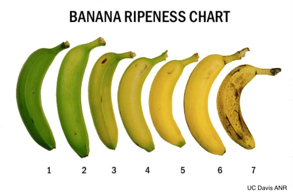 Banana supply chain