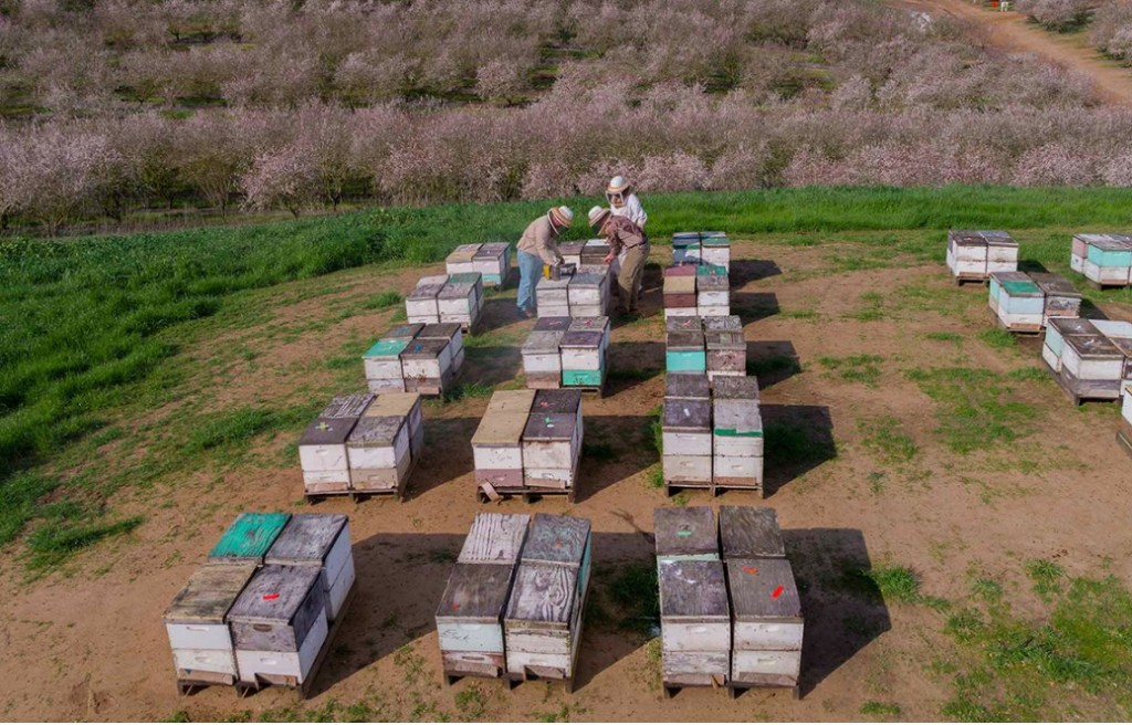 bee pollination prices and beekeeper boxes