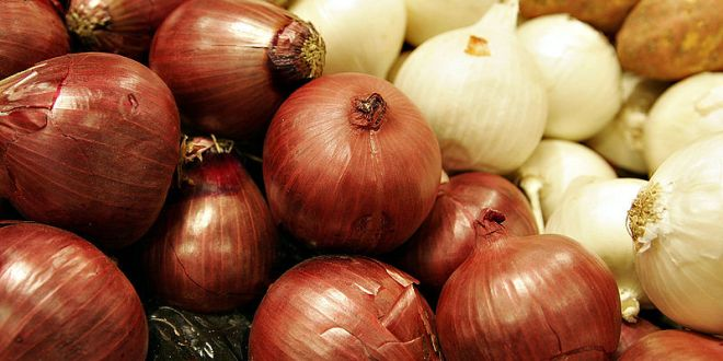 Agricultura buscará mercado a 73 mil quintales de cebolla