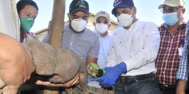 Ministro Limber Cruz inicia vacunación a 300 mil cerdos contra la Fiebre Porcina Clásica