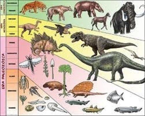 Darwin: la concepción definitiva de su teoría