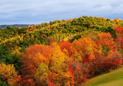 activités couleurs automne
