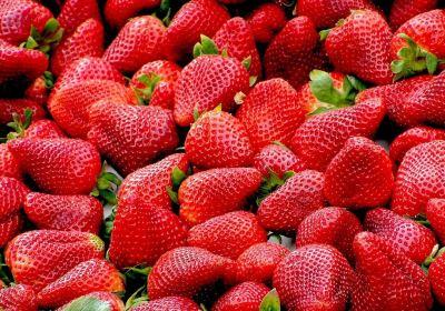 fraises autocueillette