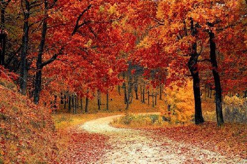 caracteristicas-del-otoño
