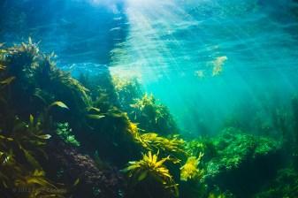 Evan_Conway_underwater_landscape