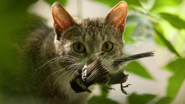 La chat a été introduit en Nouvelle-Zélande