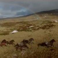 Le ministère de la Défense australien procède à l'abattage d'un troupeau de 150 brumbies Source: 7 nouvelles