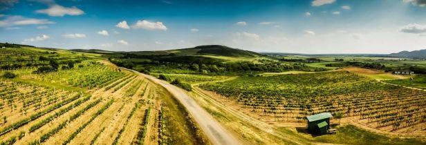 Vineyards_in_Slovakian_Tokaj
