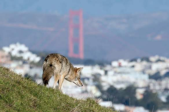 Agences de rencontres San Francisco