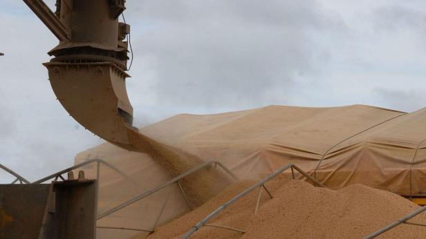 Grain Exporter