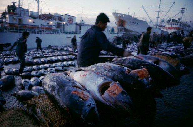 Tsukiji La nuit commence déjà le processus d'acheminement du poisson du pêcheur vers les restaurants (photo de 1988)