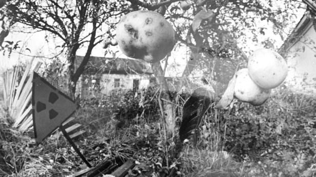 Pommier irradié à l'extérieur de la centrale nucléaire de Tchernobyl.