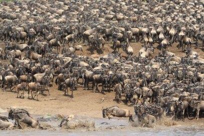 Serengeti Mara River 1 © Win Schumacher Weltwege