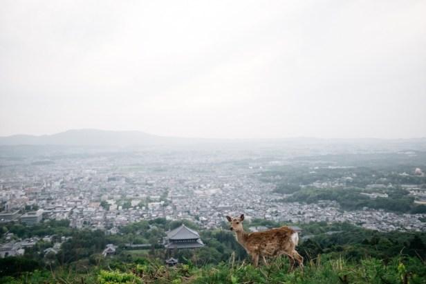 deer-nara-view