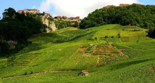 1_vigne-a-chateau-chalon