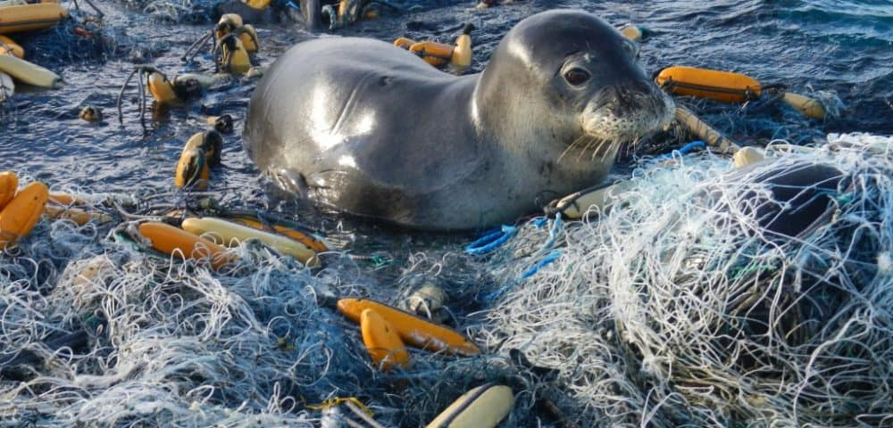 Seal in plastic pollution