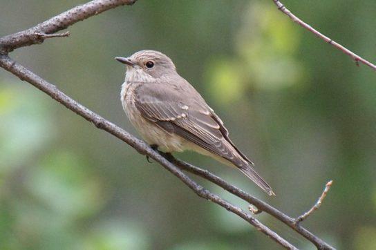 Птицы России – список птиц, виды, название и фото