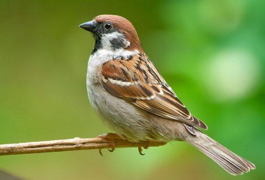 Зимующие птицы России с названиями и фото для детей всех ...