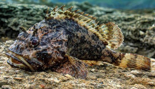 Рыбы Черного моря – фото, названия и описание   Виды и ...