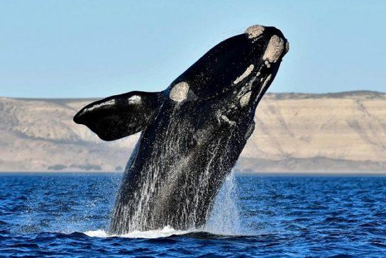 Киты - виды и фото, название и описание китов, как ...