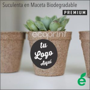 SUCULENTAS CACTUS MACETA BIODEGRADABLE COMPOSTABLE REGALO VIVO PREMIUM ECOLOGICO CORPORATIVO ECOPRINT PERU