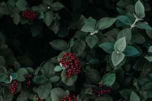 Choosing the Best Plants for your Garden 2021