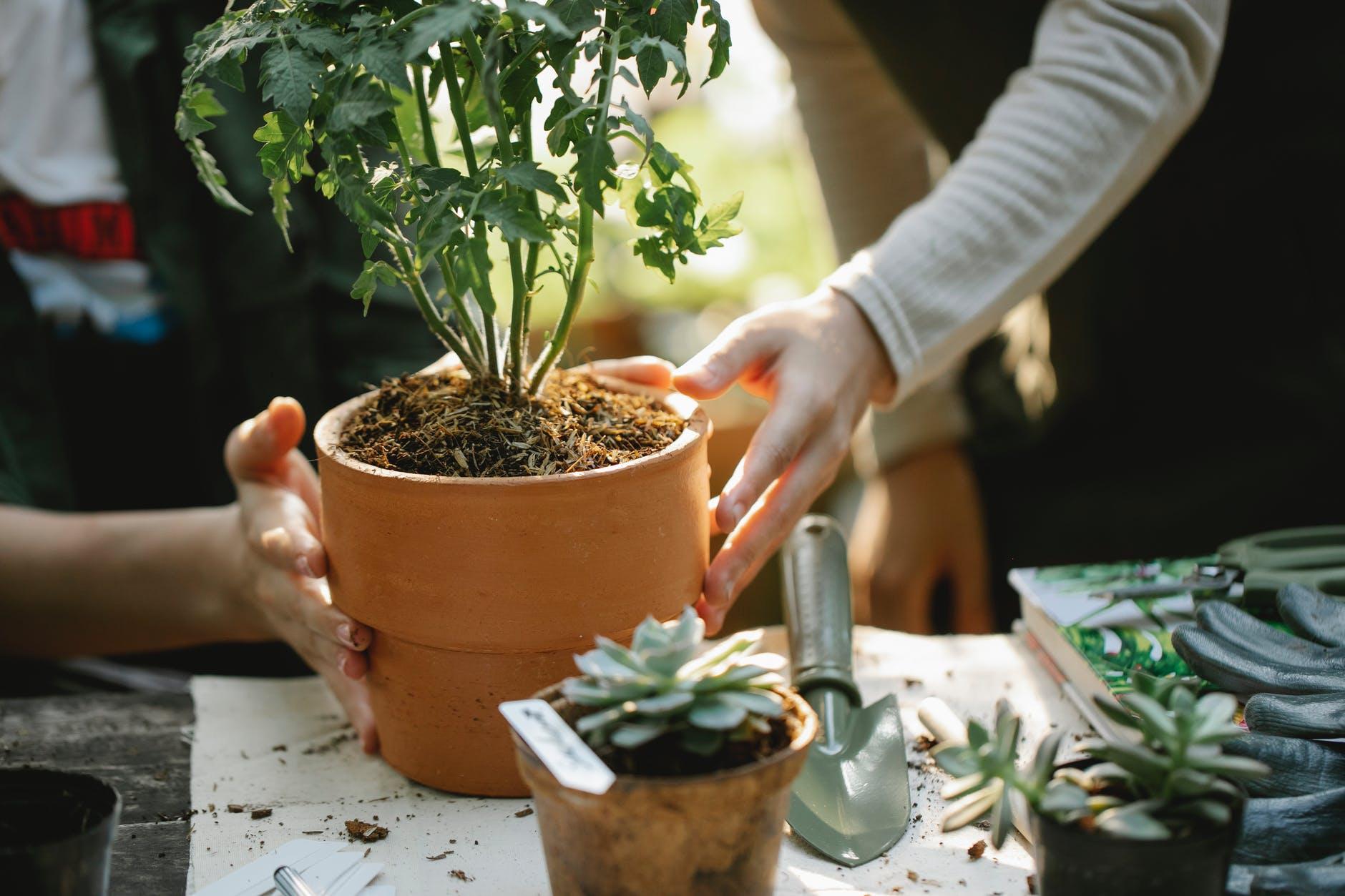 organic seeds for  gardening 2021