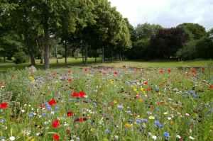 wellness benefits of gardening-environment gardening 24/7