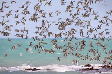 Flock of birds flying off shore over beach