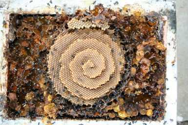 Top view of native bee hive with spiral appearance