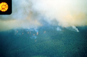 spotfires and smoke on densely-forested ridge