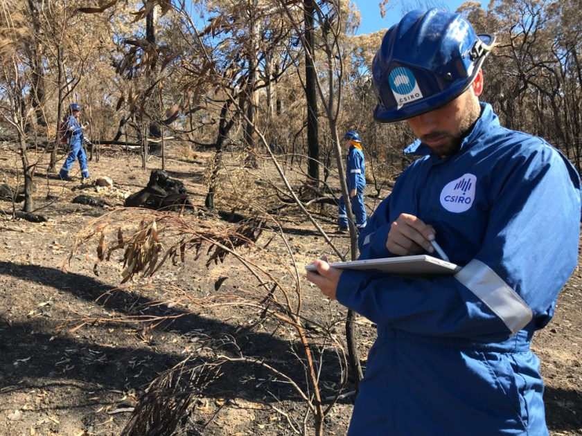 three people in blue jumpsuits and hard hats in bush after fire