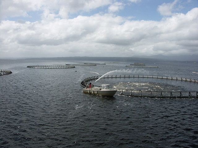 fish pens on the ocean