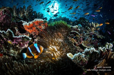 clown fish, sea anemone, clam shell highlighted on reef with sea surface backlit
