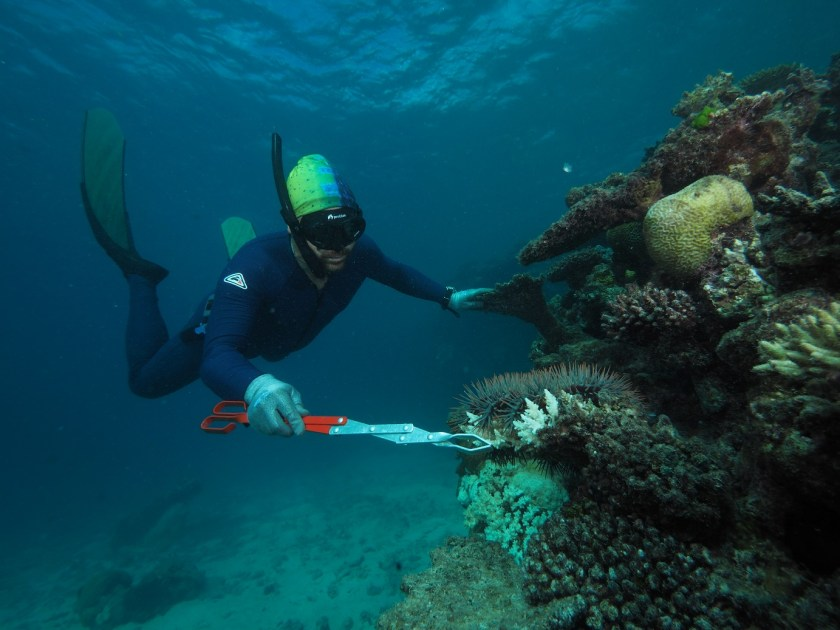 diver collects a starfish