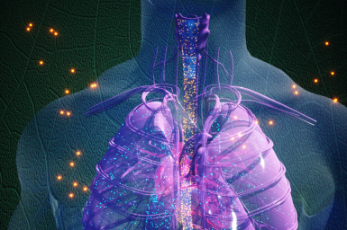 A visualisation of nanopesticides entering the human body and interacting with organs such as lungs