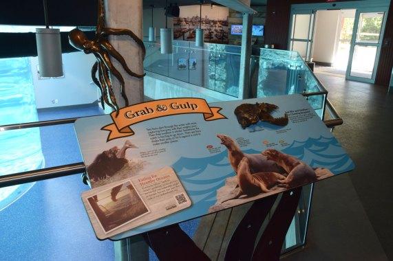 exhibit-sea-lion-1