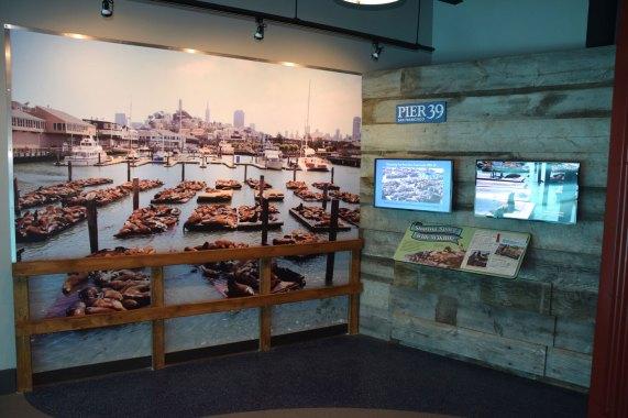 exhibit-sea-lion-6