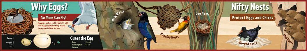 interpretive-world-birds-5
