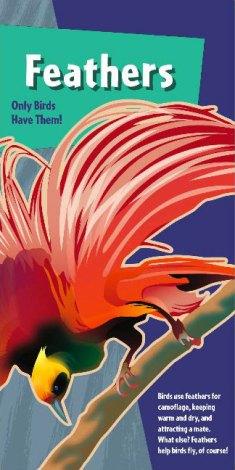 interpretive-world-birds-8