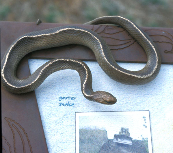 sculpture-snakepanel