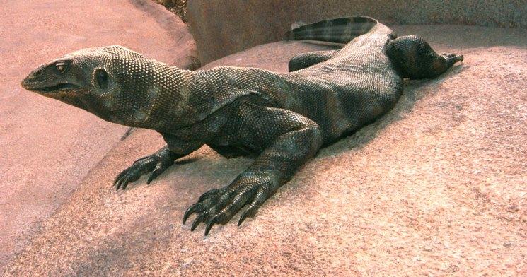 sculpture-tactile-iguana