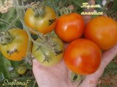 томат Pineapple Fog