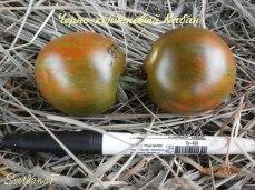 томат Черно-коричневый кабан