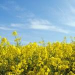 Sind biogene Kraftstoffe der Treibstoff von morgen?