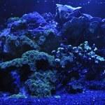 Korallen als Filter in Meeren
