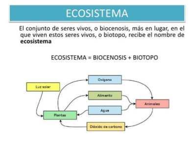 relación de biocenosis biotopo